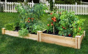 garden-raised-bed-vegetable-garden-delightful-small-vegetable-garden