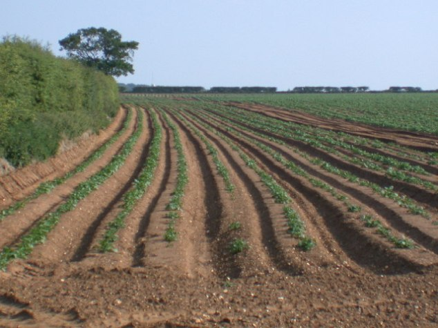 Deep_Furrows_-_geograph.org.uk_-_20348